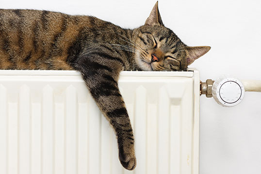 cute tabby cat sleeps along the top of a radiator with its front paw dangling down